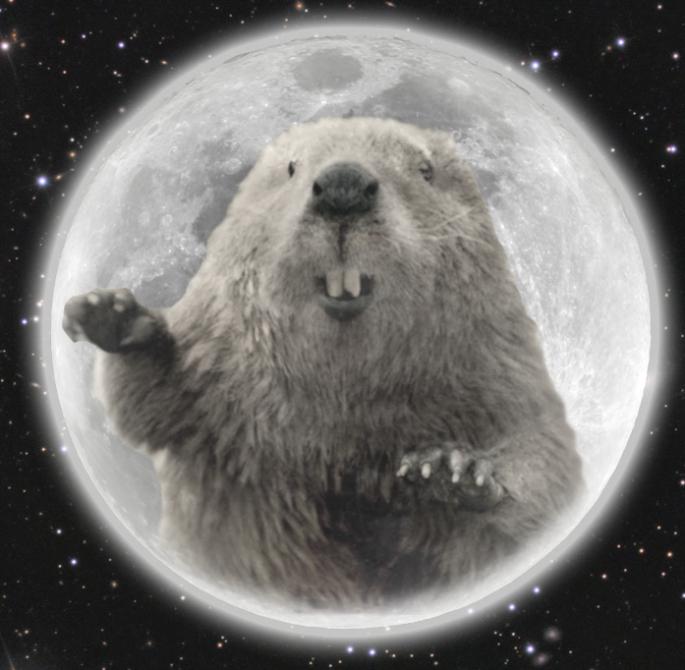 Dancing-Beaver1