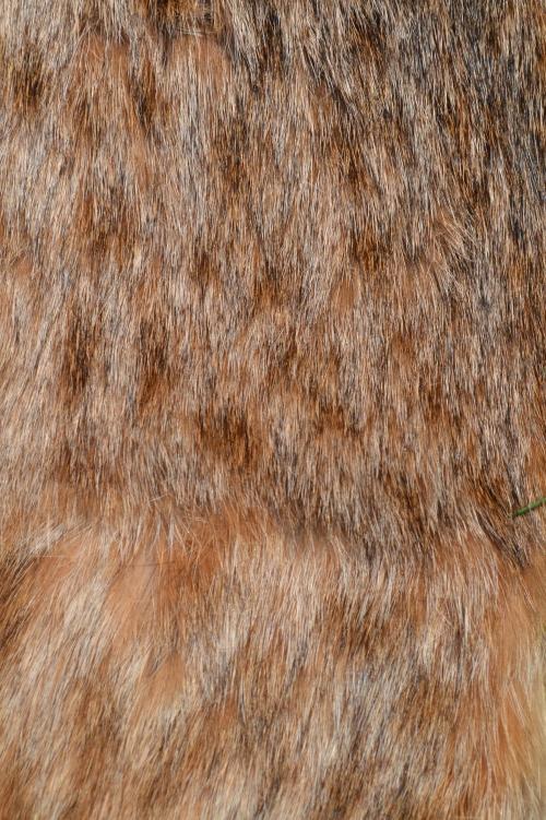 bobcat fur