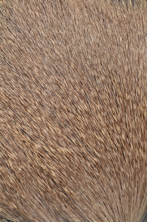 mule deer fur