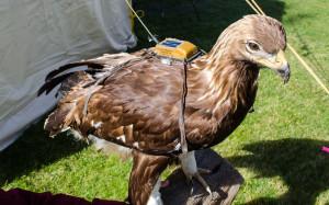 eaglewatch-telemetry-6-300x187
